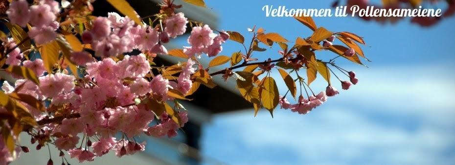Velkommen til Pollensameiene