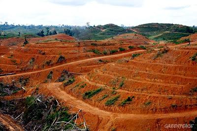 expulse-dindonesie-pour-avoir-combattu-la-deforestation