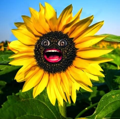 bungah matahariku tersenyum