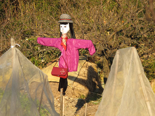 Scarecrow in Japan