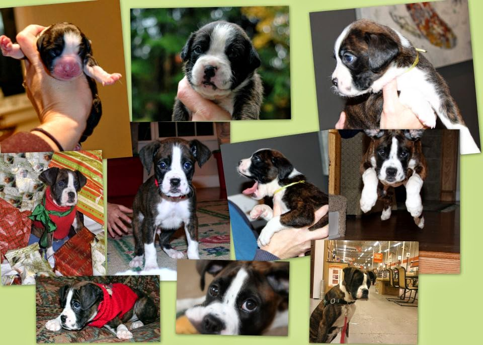 Winston+Six+Month+Collage.jpg