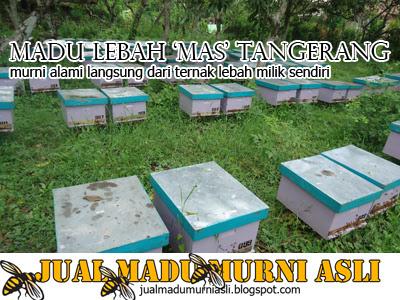 Kotak Lebah Madu