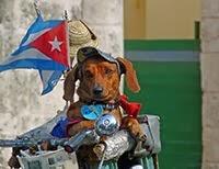 FUNNY DOG IN HAVANA