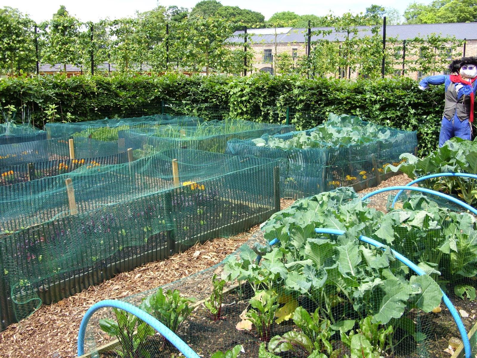 Our Kitchen Garden Kellis Northern Ireland Garden Community Gardening Update