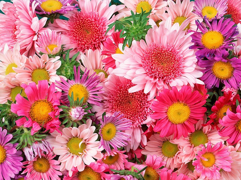 love flowers  flowers world, Natural flower