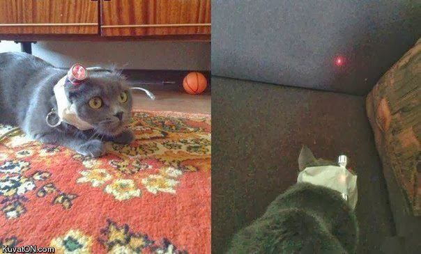 Funny cats - part 83 (40 pics + 10 gifs), cat pics, cat with laser pointer on his head