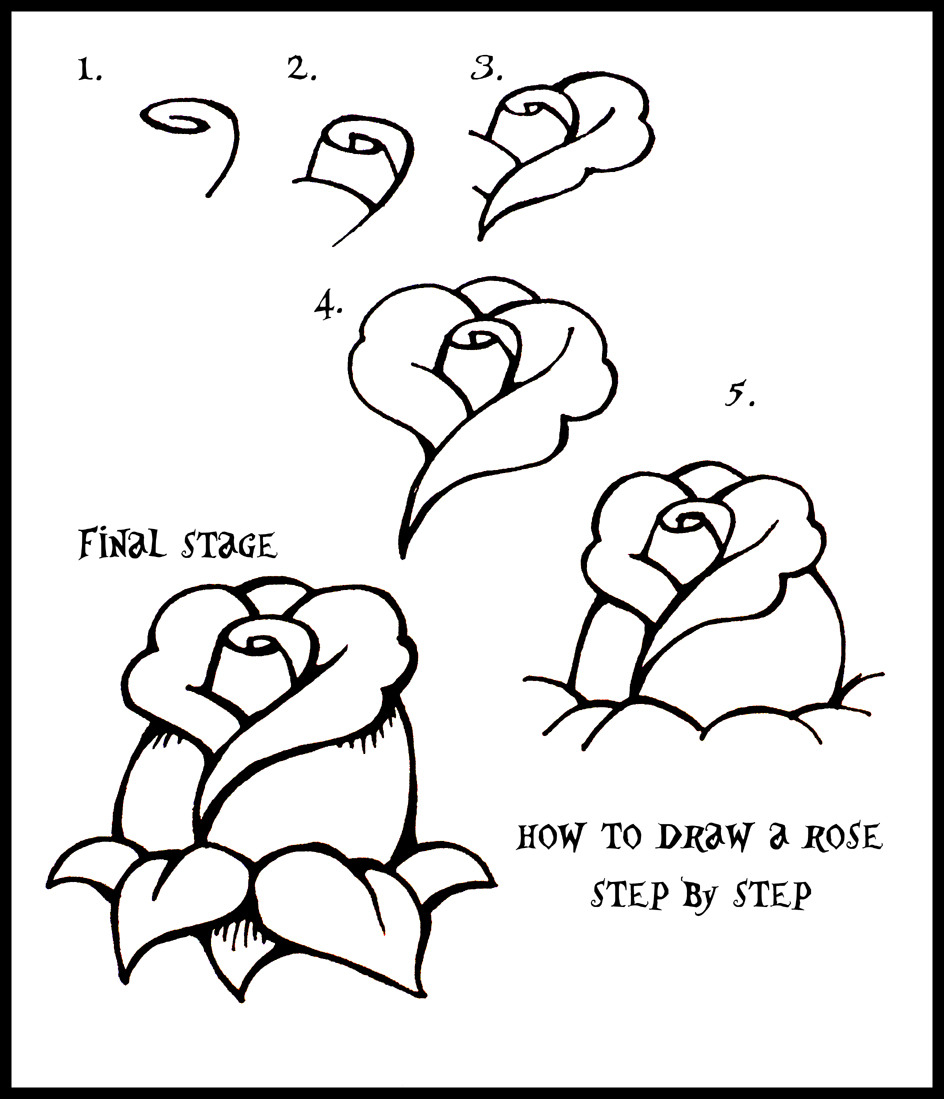 how to draw a rose step by step guide