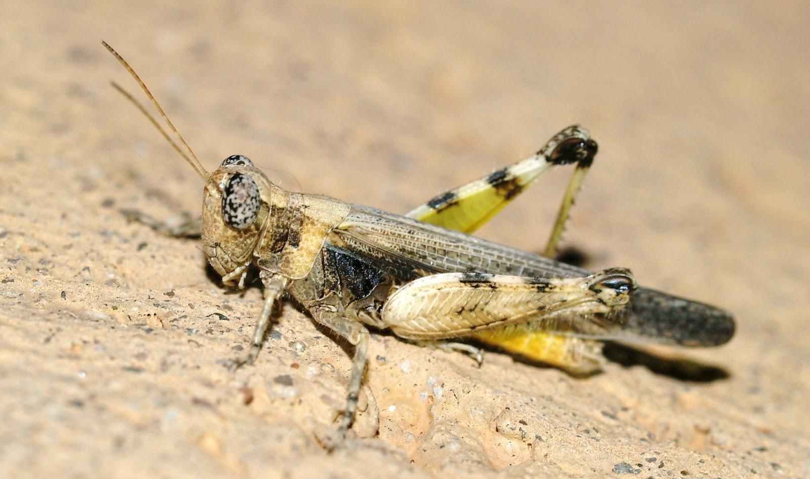 Arizona Beetles Bugs Birds And More July 2013