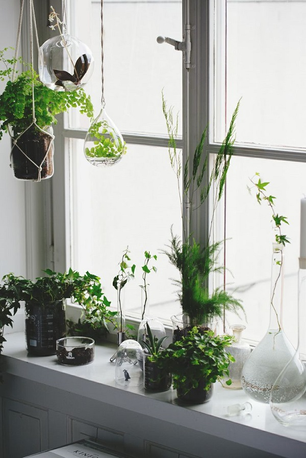 do you have hanging plants in your flat as we spend more time at home during the colder seasons iu0027ve been thinking ahead of ways to make the