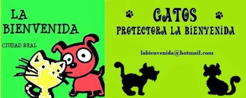 Gatos Protectora La Bienvenida