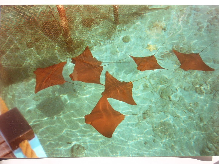 Sting rays in a mini marine center