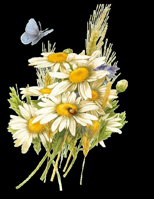 le choix de ces trois fleurs des champs,