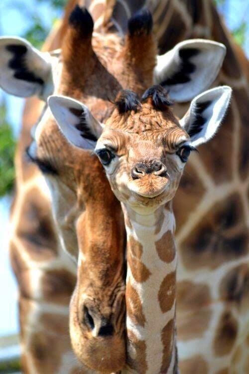 girafinha sorridente