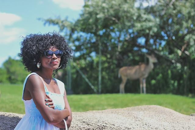 Best Attractions In Toronto   Summer Edition: Toronto Zoo