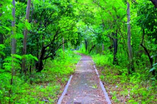 Pulau Panjang tempat wisata di jepara