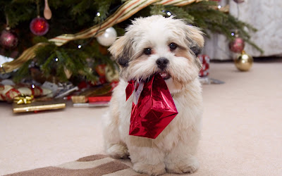 Perrito listo para Navidad - Puppy ready for Christmas