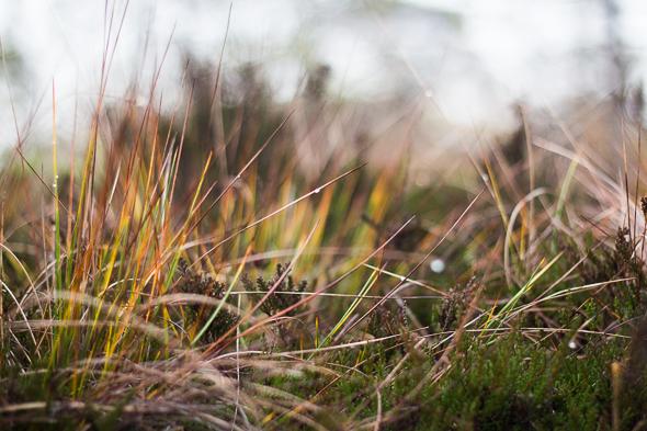 moorland photo by Zane Jenzena