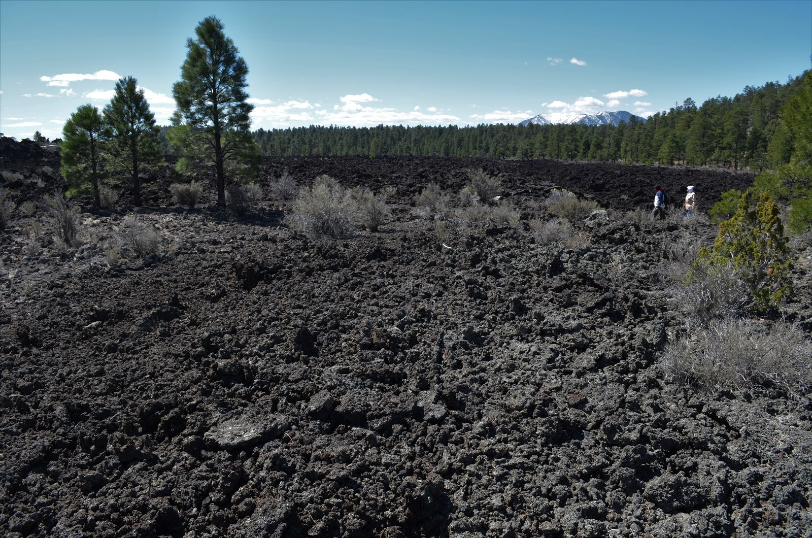 Lava fields