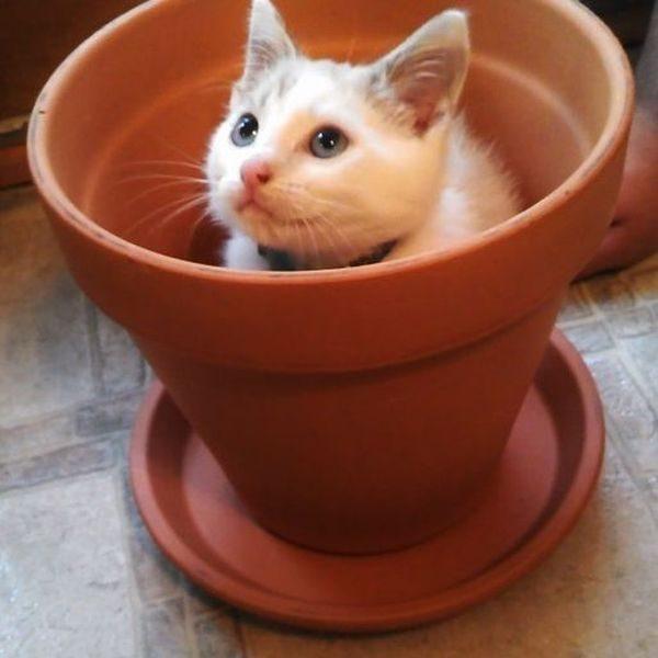 Кот спрятался в горшке
