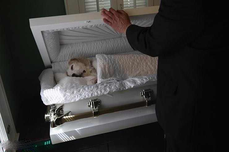 مقبرة لدفن الكلاب امريكا