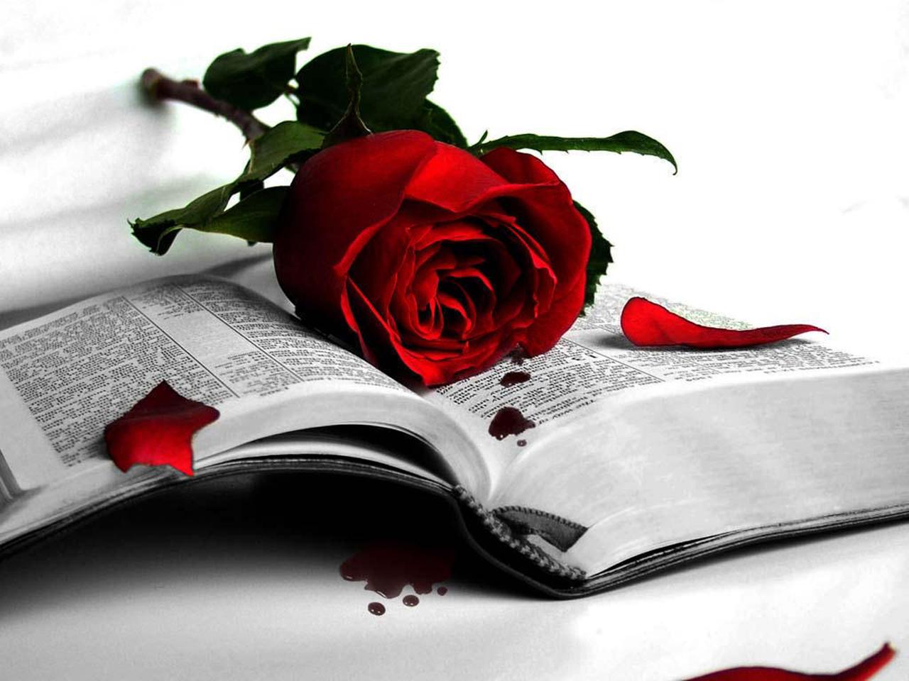 http://1.bp.blogspot.com/-6StlE87VLk0/T9V2GqAiH_I/AAAAAAAAFgw/oS6n_z7j0gA/s1600/Rose-Wallpaper-76.jpg