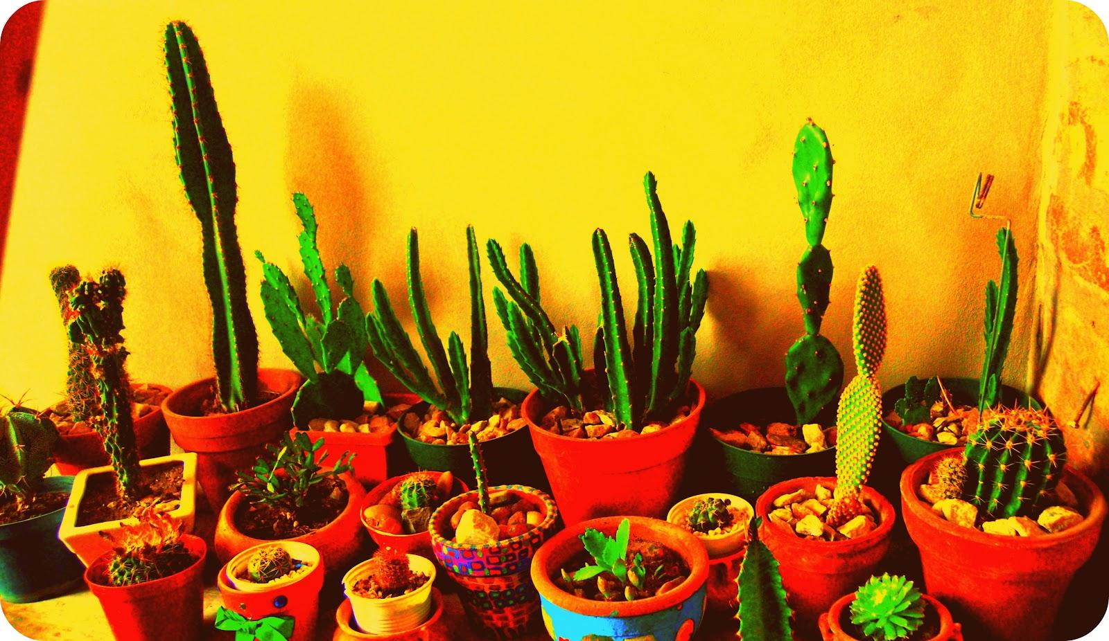 10 plantes qui attirent les nergies positives. Black Bedroom Furniture Sets. Home Design Ideas