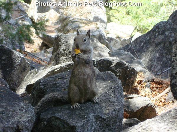 http://1.bp.blogspot.com/-6TJjUKrjDek/ThiKcHJ-ILI/AAAAAAAABnQ/hG_SfhZuhWM/s1600/Squirrel%2Bpics_0002.jpg