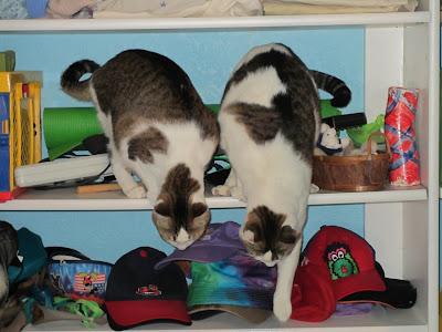 Cats in a closet