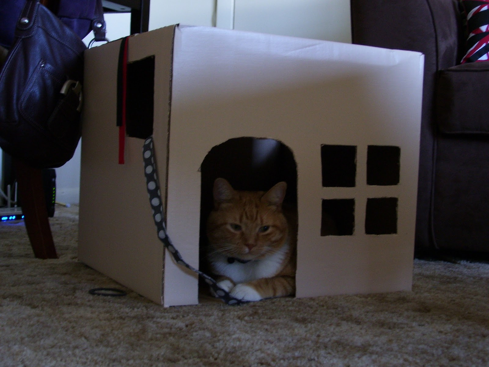 apartment to apartment cardboard cat house. Black Bedroom Furniture Sets. Home Design Ideas