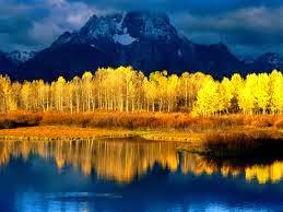 peuplier-faux trembles-symbole-de-l'Utah