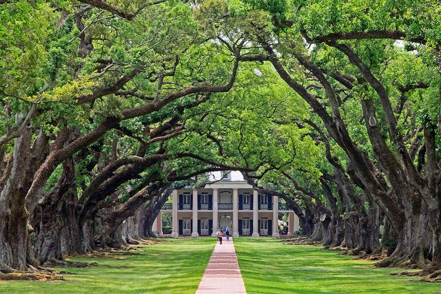 Amazing Place In The World 300 Year Old Oak Trees Oak