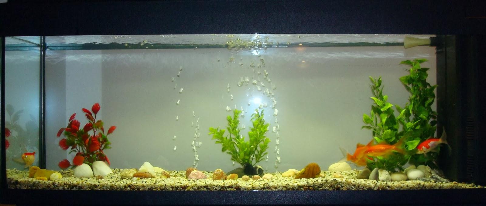 Elynetta creazioni caridine che passione for Acquario pesci rossi
