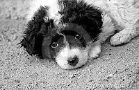 ¡Adopte un perrito!...