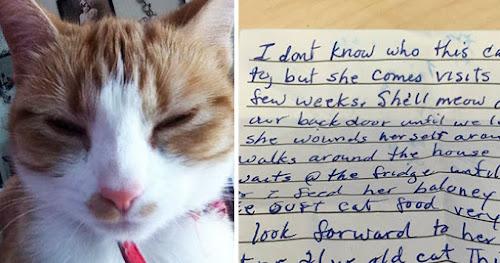 Gato volta pra casa com nota dizendo que ele tinha uma família secreta