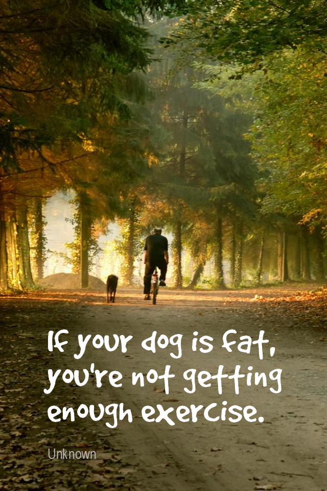 visual quote - image quotation for FITNESS - If your dog is fat, you're not getting enough exercise. - Unknown