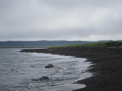 A bird near Hvítserkur, Iceland