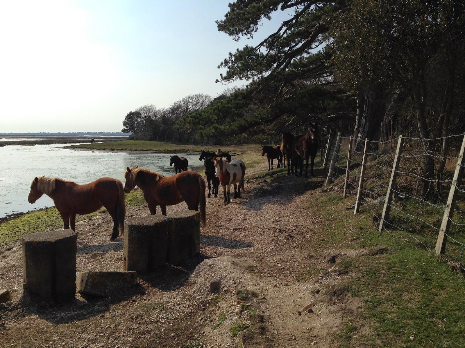 Horses, Lymington