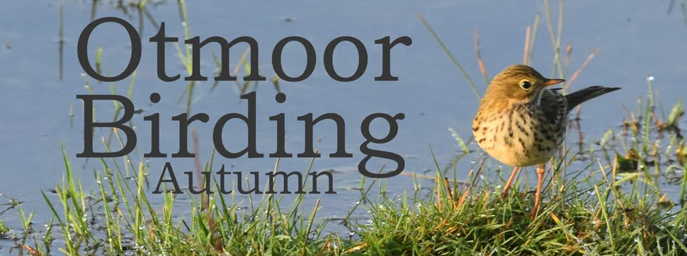 Otmoor Birding