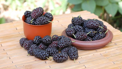 Uses of Mulberry Fruit for Skin Care
