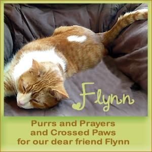 Purr for Flynn