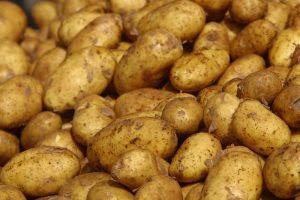 Καλλιέργεια πατάτας σε υπόγεια