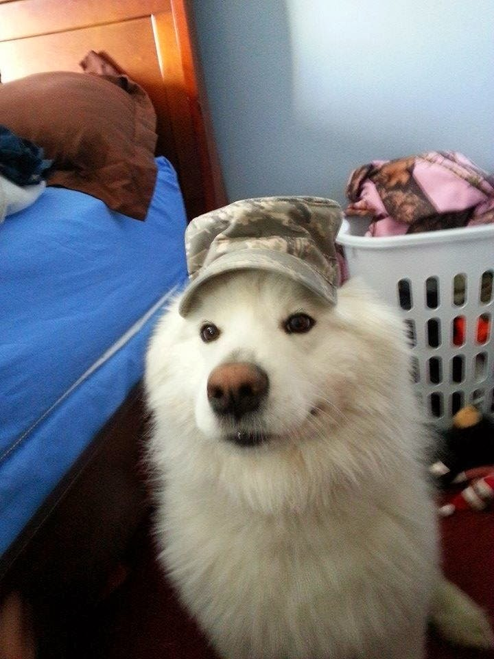 Cute dogs - part 8 (50 pics), cute white dog wears military hat