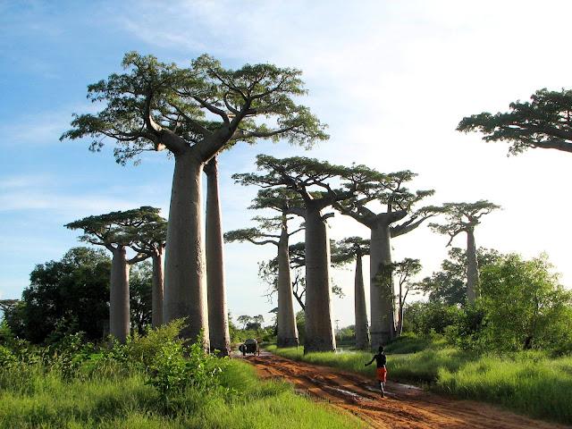 http://1.bp.blogspot.com/-6Wb4JZWifo0/T4NcxVr-7zI/AAAAAAAAFjQ/Nn2YBWEsLuI/s200/Madagascar+2.jpg