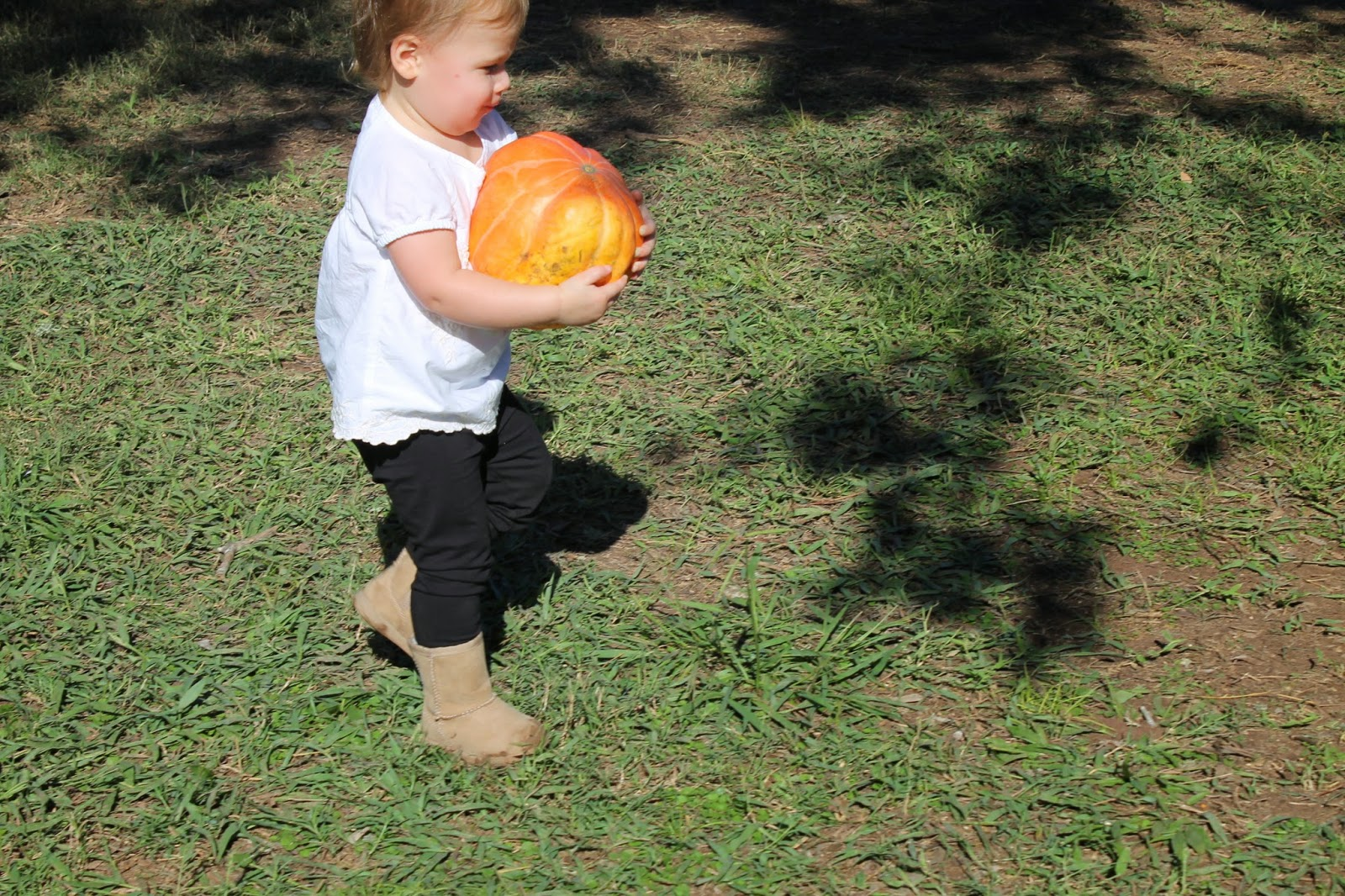 Anabelle carrying pumpkin | Bubbles and Gold (www.bubblesandgold.com)