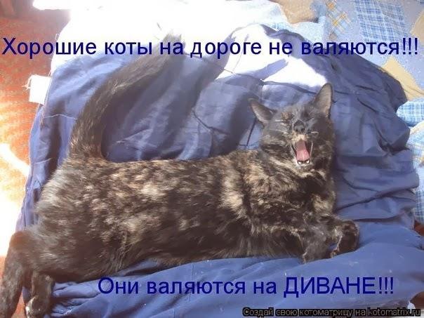 Смешные фото кошек с надписями
