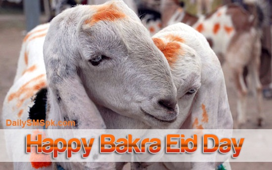 Happy bakra Eid day
