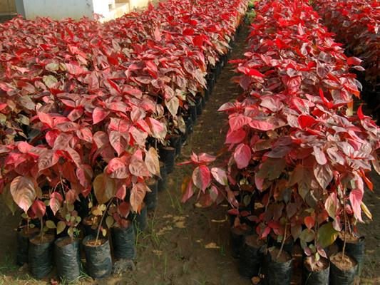 Plantas de jardin cuidado de plantas for Arbustos de exterior resistentes
