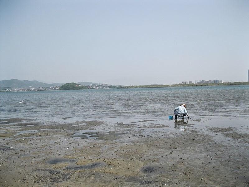 Gannosu Estuary, Kyushu, Japan