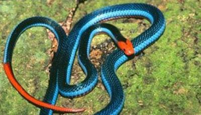 اغرب اانواع الثعابين في العالم 7.jpg