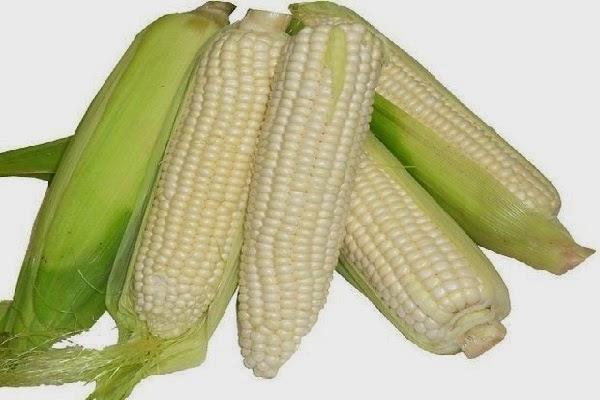 أهم 9 فوائد تدفعك لتناول الذرة بجميع صورها باستمرار
